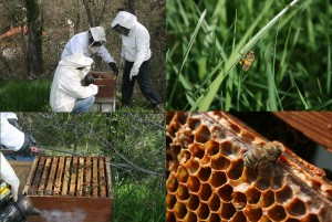 Corvée du 10 avril 2015: la ruche
