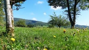 Voyage dans le Jura: la campagne Jurassienne.