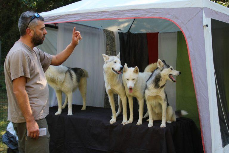 fete chiens