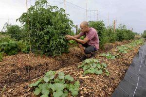 La permaculture à l'honneur
